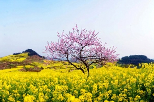 Những hình ảnh đẹp về mùa Xuân